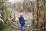 Running Through the Corn Maze