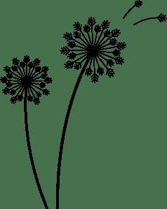 dandelions_black